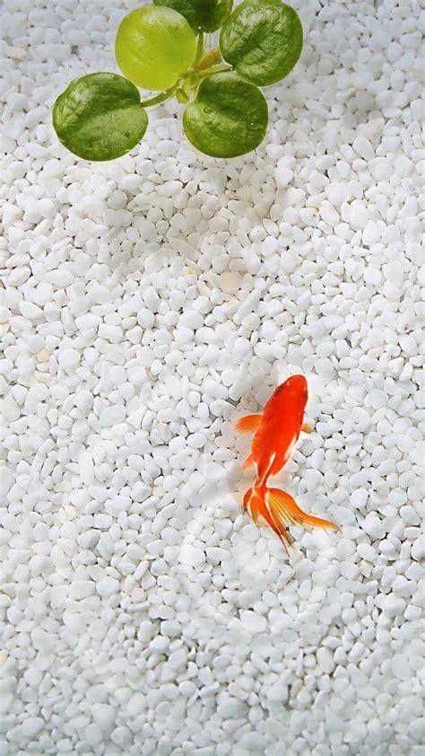 Animal Wallpaper For Mobile - animal mobile wallpaper gallery