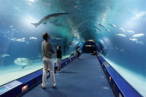 aquarium cite des sciences valence la cit 233 des sciences