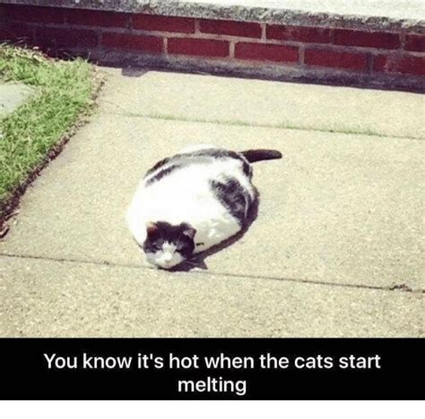 Melting Meme - you know it s hot when the cats start melting cats meme on sizzle