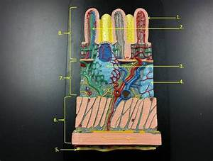 173 Best Anatomy  Physiology Images On Pinterest