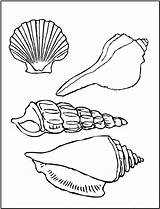 Coloring Seashell Pages Printable sketch template