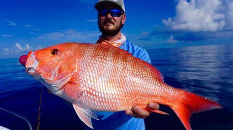 snapper grouper fishing huge sea deep battle