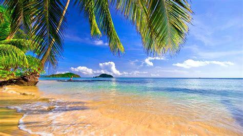 shore palms tropical beach summer scenery hd wallpaper