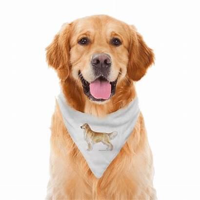 Golden Retriever Dog Transparent Labrador