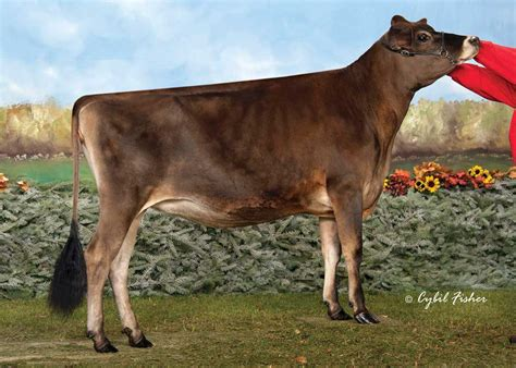 Show Results For Aceshi Dairy Cattle