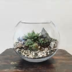 terrarium plants desert world terrarium small bioattic specialty plants