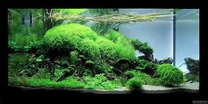 Co2 Rechner Aquarium : closer flowgrow aquascape aquarium database ~ Orissabook.com Haus und Dekorationen