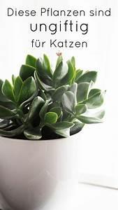 Welche Pflanzen Sind Für Hunde Giftig : welche pflanzen sind ungiftig f r katzen cats katzen katzen wohnungen und katzen haus ~ Watch28wear.com Haus und Dekorationen