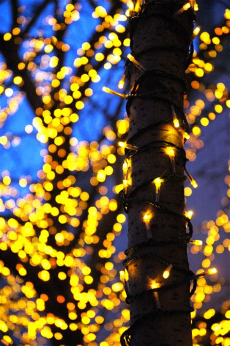 chartreuse holiday lights good as gold jameswagner com