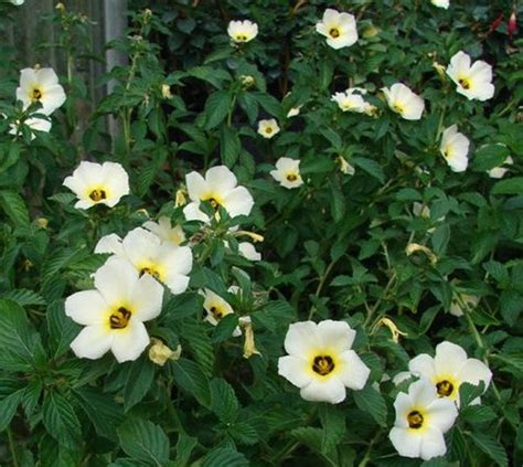 great border plants great border plants for landscaping a place called home pinterest