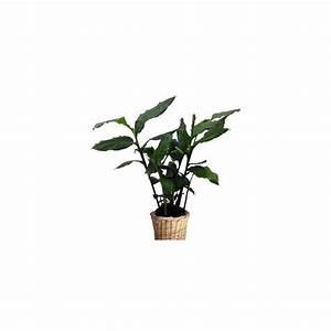 Cache Pot Tressé : cardamome cache pot tress livraison express plantes et jardins ~ Teatrodelosmanantiales.com Idées de Décoration