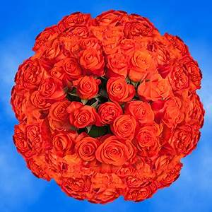Bright Orange Rose Flowers for Bouquets Super Wow Roses
