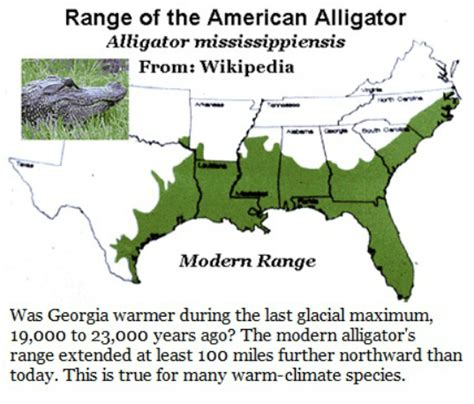 range of american alligator 19f southeastern thermal enclave exploring s fossil record