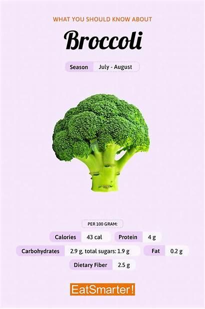 Broccoli Vegetables Vividly Incredibly Healthful Delicious Same