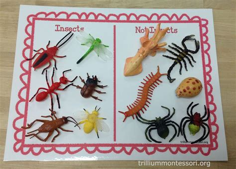learning about bugs activities for preschool and 970 | 68ff6f530f8612eb3343b2d5865cd01f