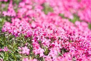 Blühende Hecke Schnellwachsend : niedrige beeteinfassung pflanzen pflanzen f r nassen boden ~ Eleganceandgraceweddings.com Haus und Dekorationen