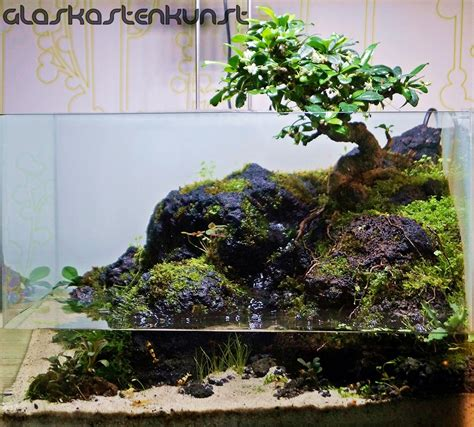 bonsai paludarium aquascaping world forum georgia