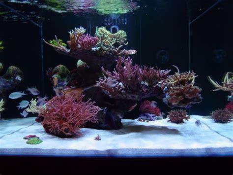 reef aquarium aquascaping 11 best reef cube aquariums images on
