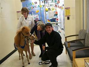 Honor, the Therapy Mini-Horse, Brings Cheer to Ailing Kids ...