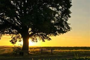 Bank Um Baum : die bank unter dem gl henden baum foto bild landschaft b nke in der landschaft z une ~ Eleganceandgraceweddings.com Haus und Dekorationen