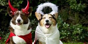 14 Funny Dog Halloween Costumes in 2019 - Best Pet Costume ...