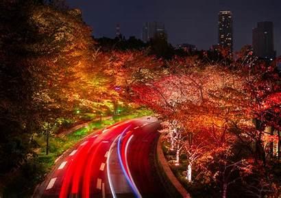 Japan Night Tokyo Autumn Trees Roads 4k