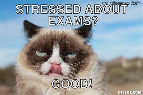 Good Meme Grumpy Cat - grumpy cat memes good image memes at relatably com