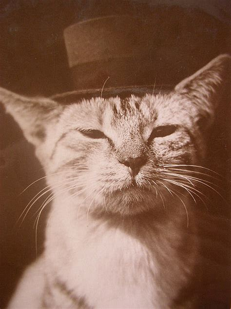 18 Amazing Vintage Cat's Pictures  Kitty Bloger