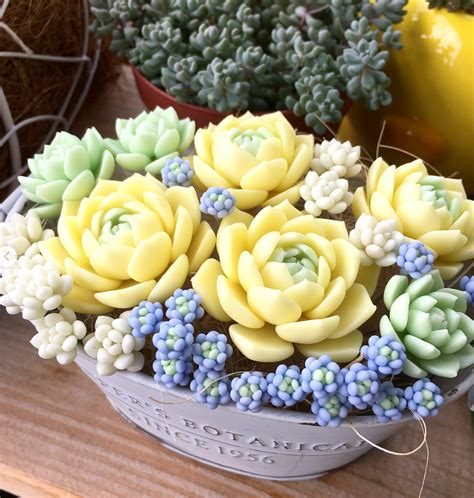 100+ Gorgeous Succulent Plants Ideas For Indoor And Outdoor Full Of Aesthetics - Fashionsum