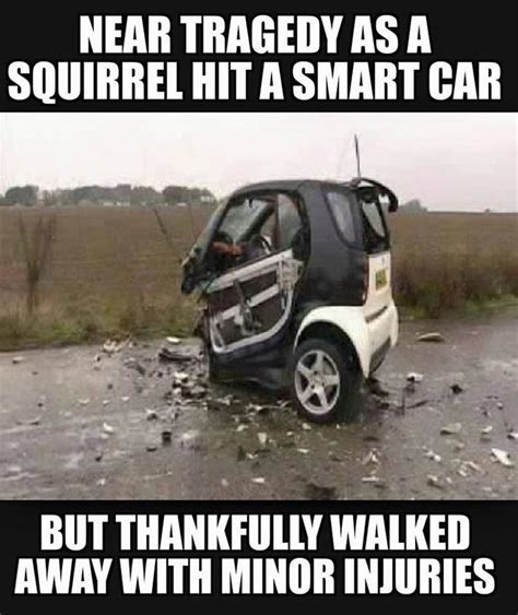 smart car smart car hits deer memes