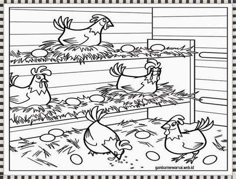 gambar mewarnai ayam bertelur warna gambar ayam