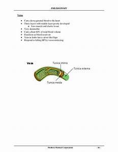 Phlebotomy Manual