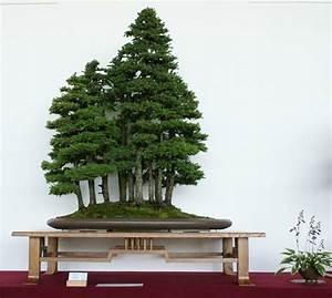 Bonsai Arten Für Anfänger : prachtvolle bonsai arten ~ Sanjose-hotels-ca.com Haus und Dekorationen