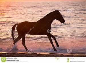 Horse Running Through Water Stock Image - Image: 31968149