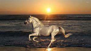 White horse running on the beach wallpaper - Animal ...