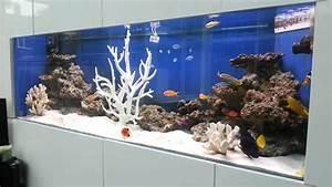 Saltwater Fish Only Aquarium with Tangs, Angelfish, Clown