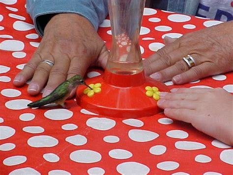 what do i put in my hummingbird feeder when to put out hummingbird feeders living in moving