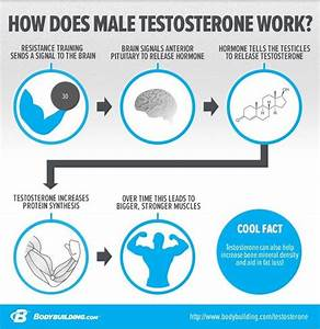 What Does Testosterone Do For Working Out