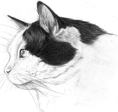 Cat Profile Drawing By Pessimischick On Deviantart