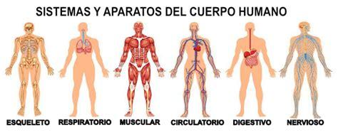 El cuerpo humano Aumentaty Community