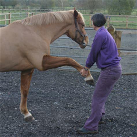 gill maybury equine chiropractic holistic manipulation