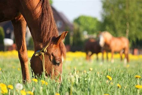 horse eating horses eat food grass kind nutrition its