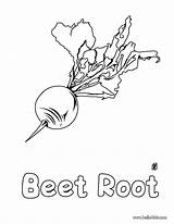 Coloring Pages Root Beet Beetroot Vegetable Pepper Beets Printable Nature Template Hellokids Apple Getcolorings sketch template