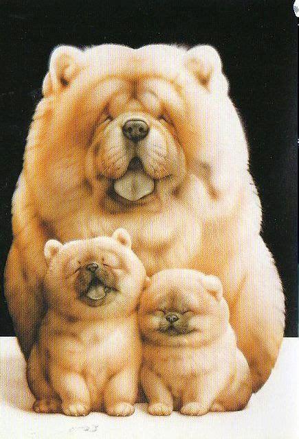 Pomeranian Teacup Dog Teacup Dogs Pinterest Teacup