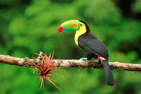 Discover Costa Rica's Rainforests - Explore
