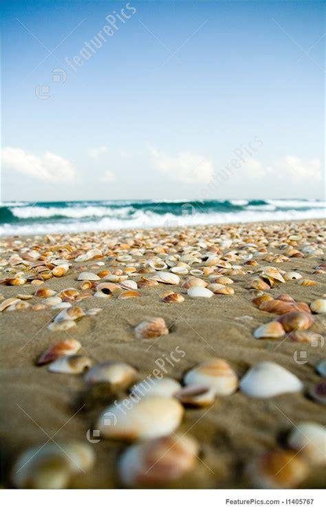 picture  lots  sea shells   shore