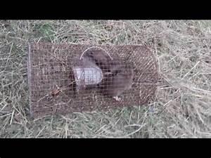 Comment Tuer Un Rat : comment se d barasser d finitivement des rats sans les ~ Melissatoandfro.com Idées de Décoration