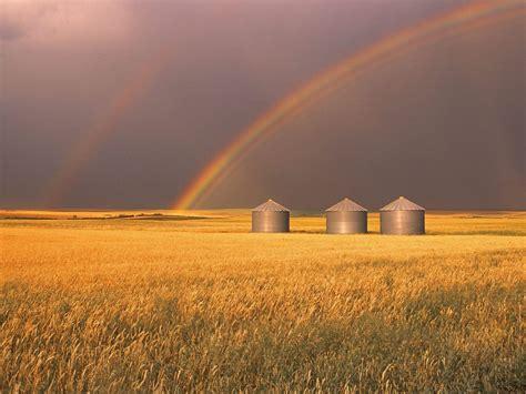 nature harvesting rainbows alberta canada picture nr