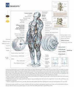 Muscle Group Of The Week  Leg Workouts