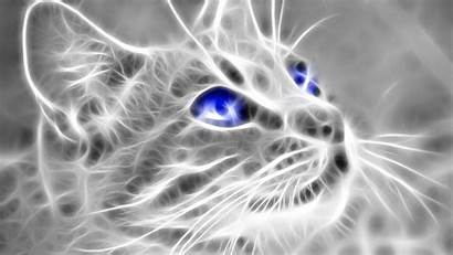 4k 3d Cat Wallpapers Backgrounds Background Itl